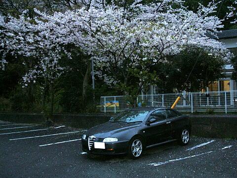 Sakura_gt